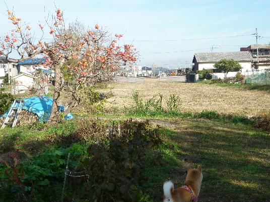 2012_1128_103537-P1100009(1).JPG